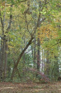 photo of woods