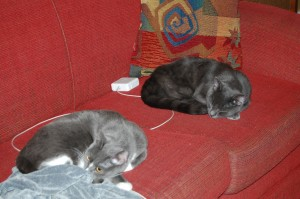 photo of cats sleeping