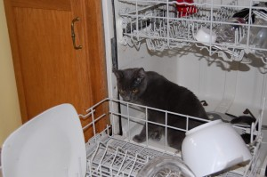 photo of a cat sitting in a dishwasher
