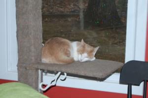 photo of a kitten asleep