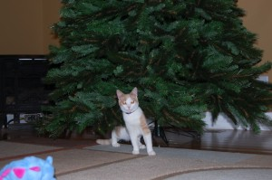 Photo of kitten exploring Christmas Tree