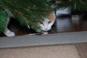 photo of kitten stealing Christmas ornament