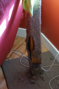 photo of destroyed cat tree
