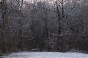 Here's the backyard. With the woods, only about half of what we got actually hit the ground.